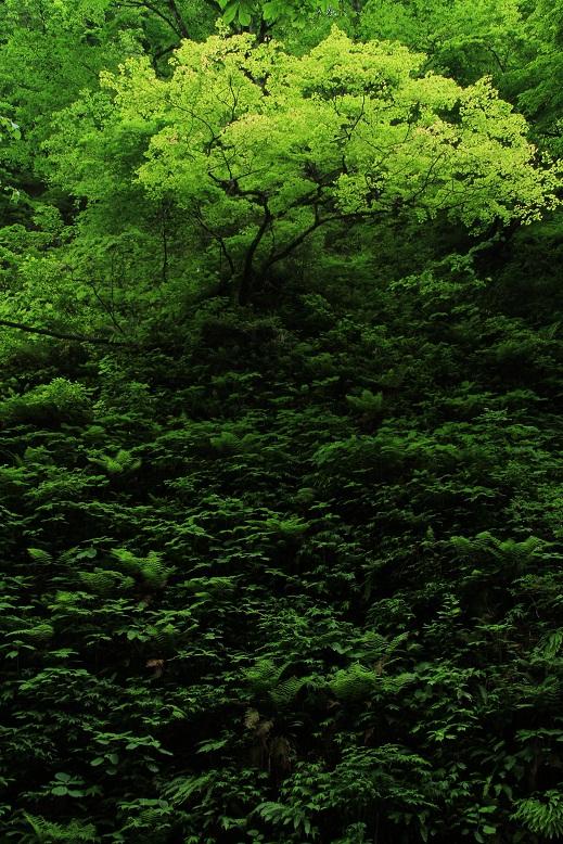 シワガラの滝、6