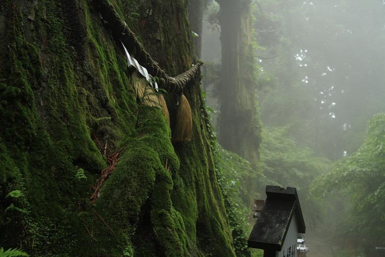 葛木神社、3