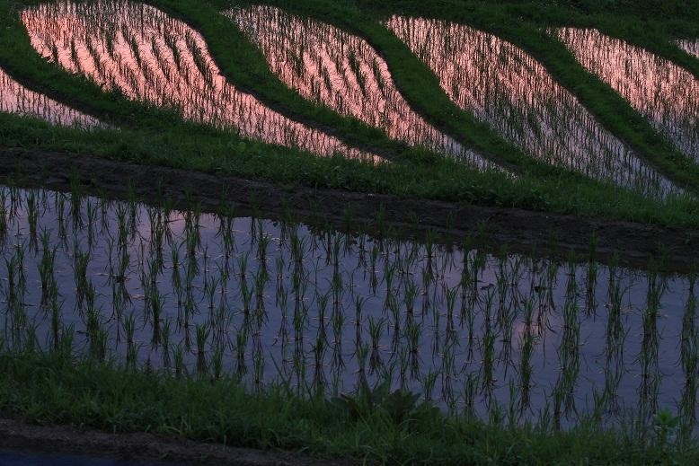 下赤坂の棚田、8