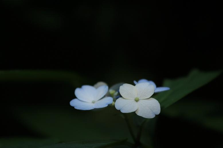 岩船寺、8