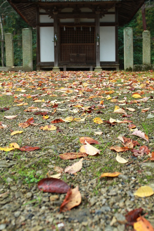 胡宮神社、4
