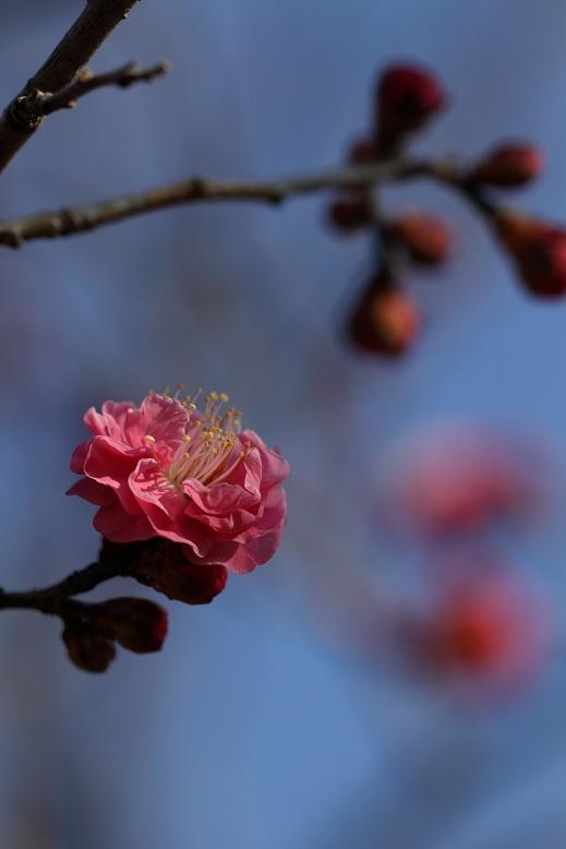 山田池公園にて、9