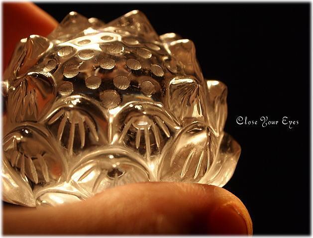 lotus-image3.jpg