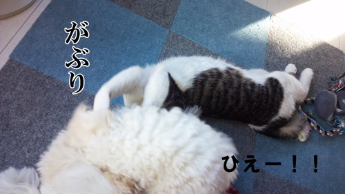 2013-01-20_15-09-27_832.jpg