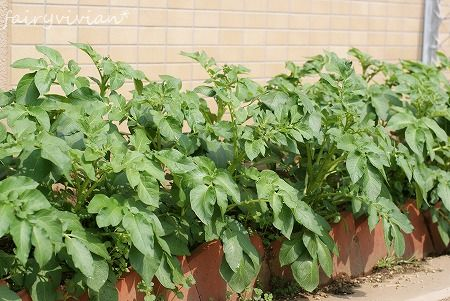 vegetables120425 1