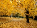 november-gold-autumn-6980496.jpg