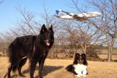 飛行機20131205