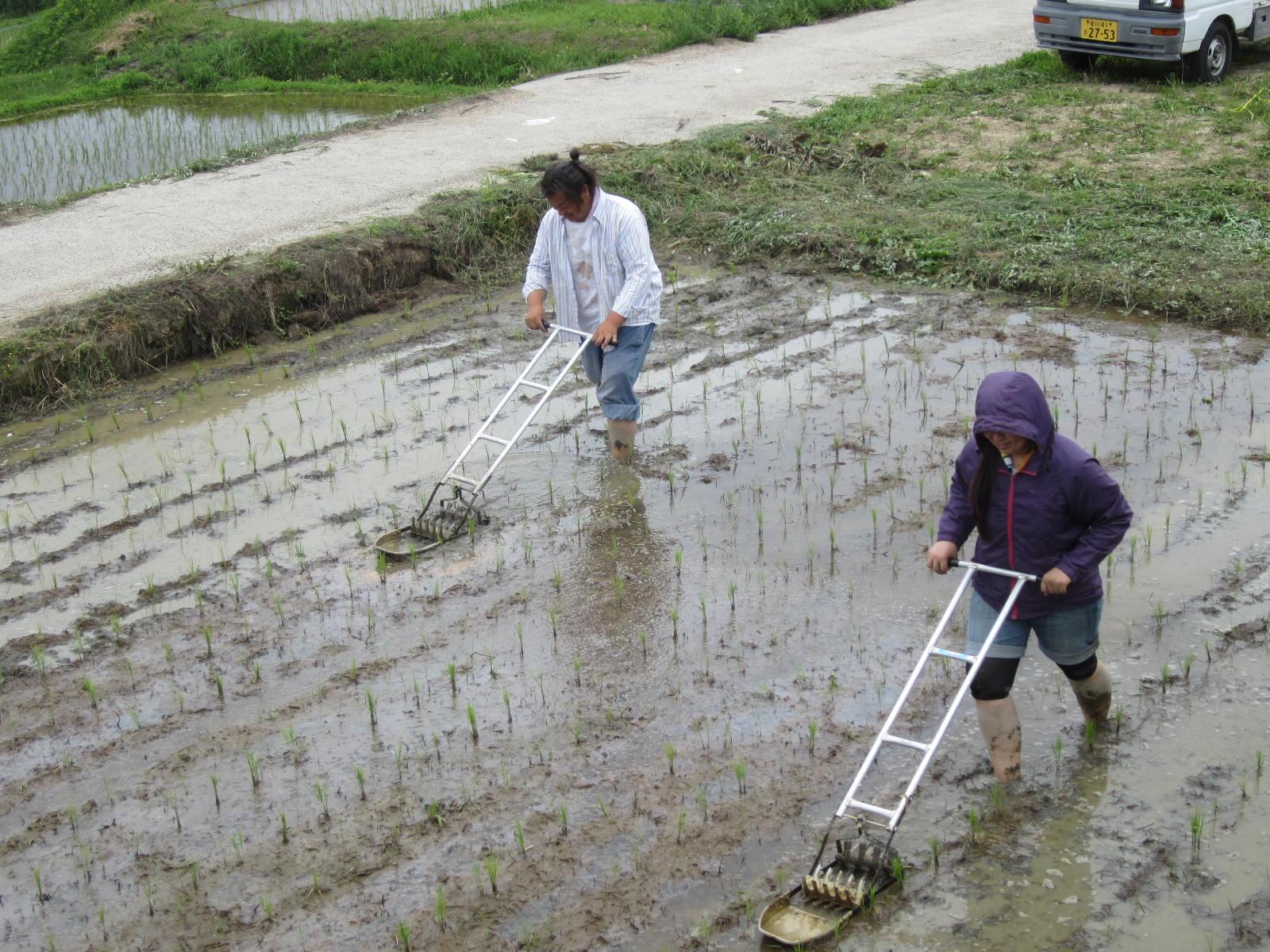 豊島での除草作業