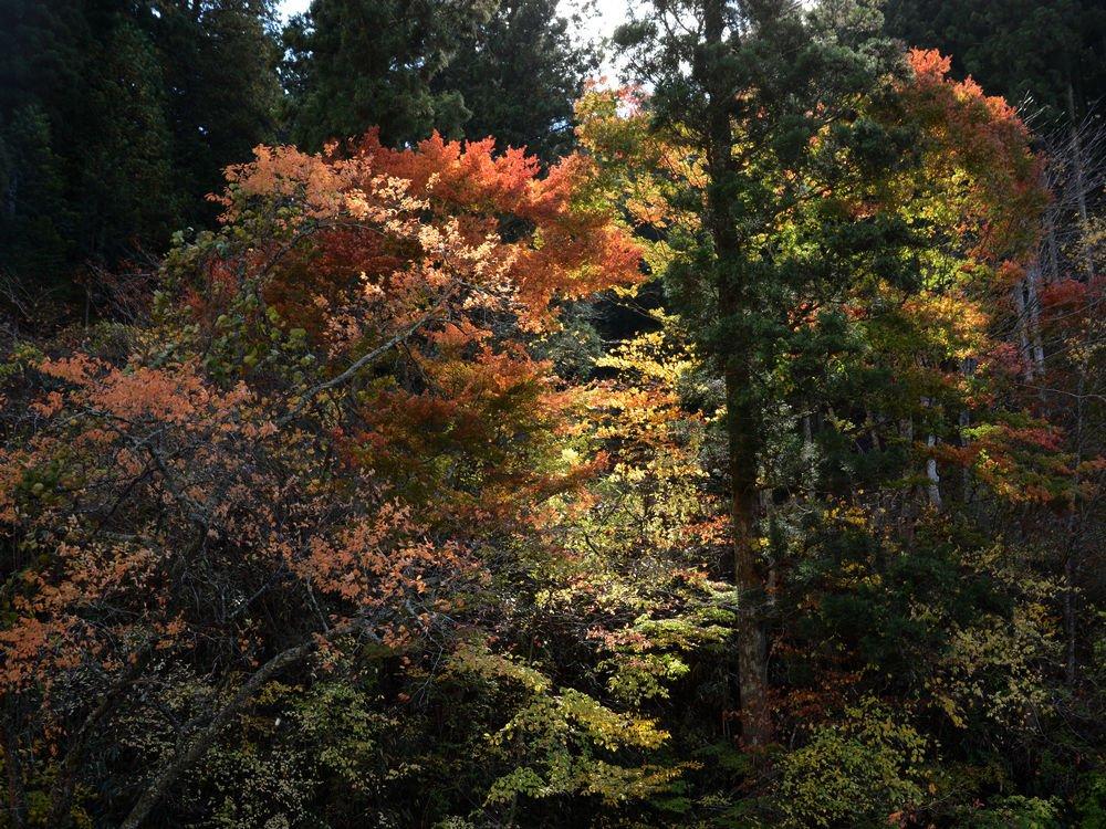 SHU_3701.jpg
