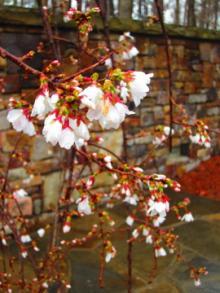 Garvan Woodland Gardens-1, 2013-03-27