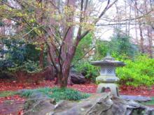 Garvan Woodland Gardens-2, 2013-03-27