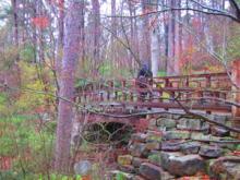 Garvan Woodland Gardens-3, 2013-03-27
