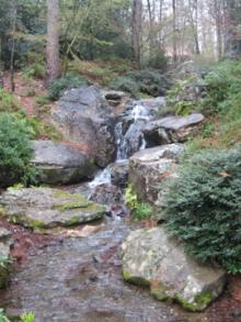 Garvan Woodland Gardens-4, 2013-03-27