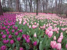 Garvan Woodland Gardens-6, 2013-03-27
