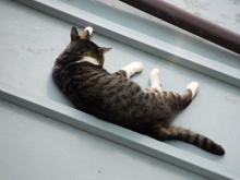 いつもベランダから見えるネコもすでにぐったり・・。