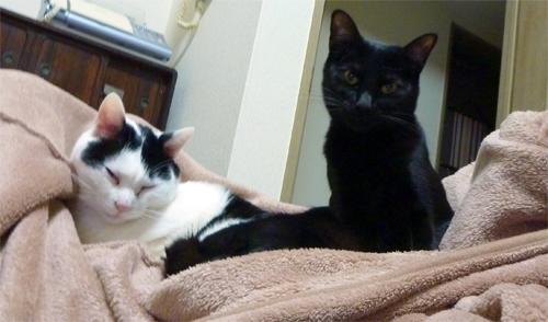 毛布の上の猫たち