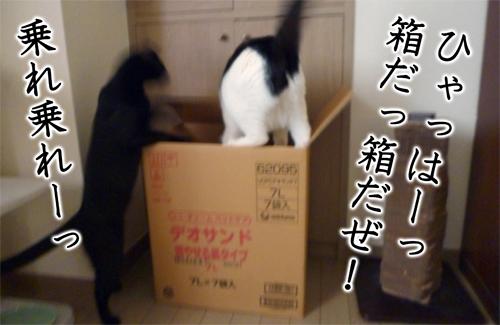 ひゃっはー!箱だ箱だっ
