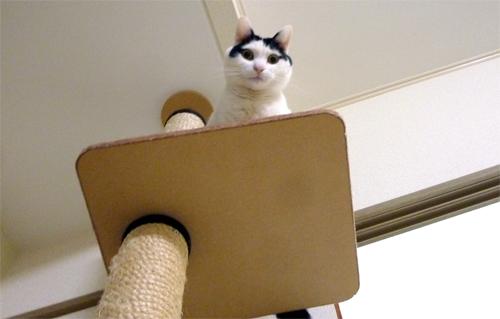 キャットタワーの白黒猫