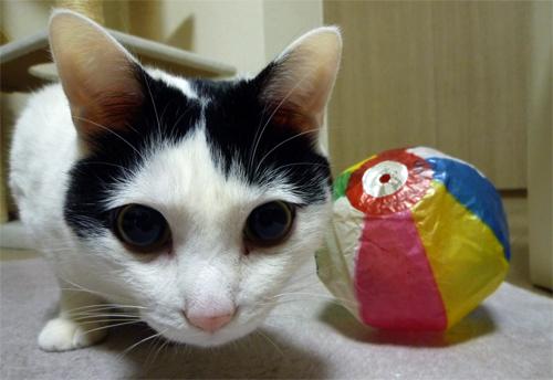 白黒猫と紙風船