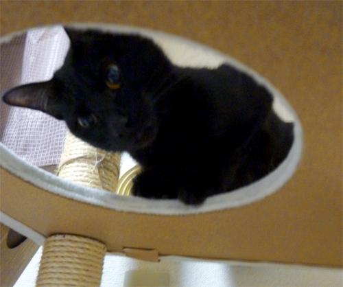穴から覗く黒猫
