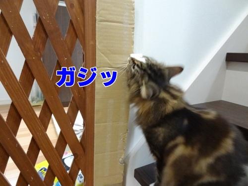 tugofwar24_text.jpg