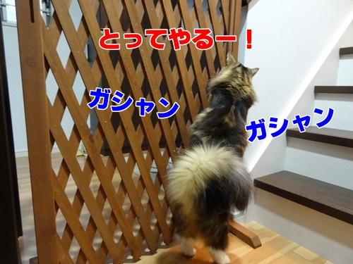 tugofwar3_text.jpg