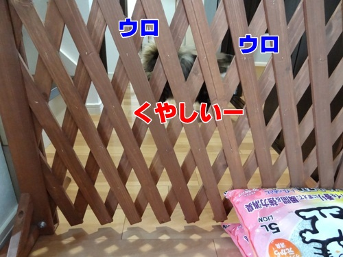 tugofwar6_text.jpg