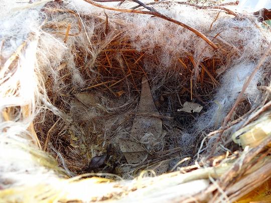 120904鳥の巣-2