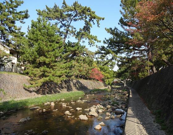 121108夙川公園-2