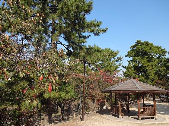 121108夙川公園-1