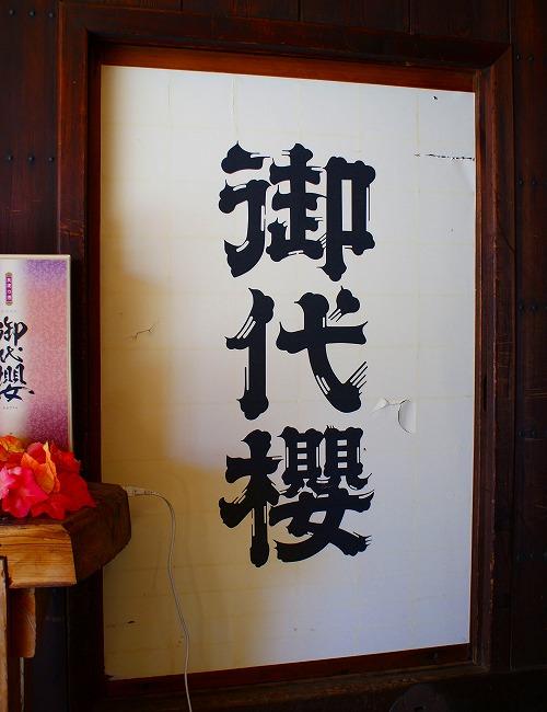 111116太田宿御代櫻-5
