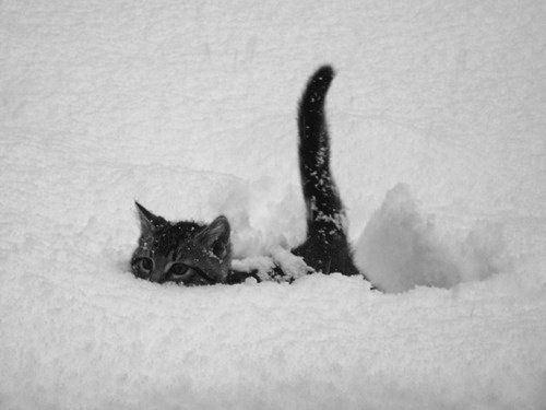 cat-saturday-01_201312161441196ed.jpg