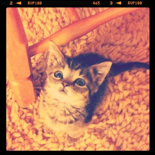 cat-saturday-13_201312161445323d0.jpg