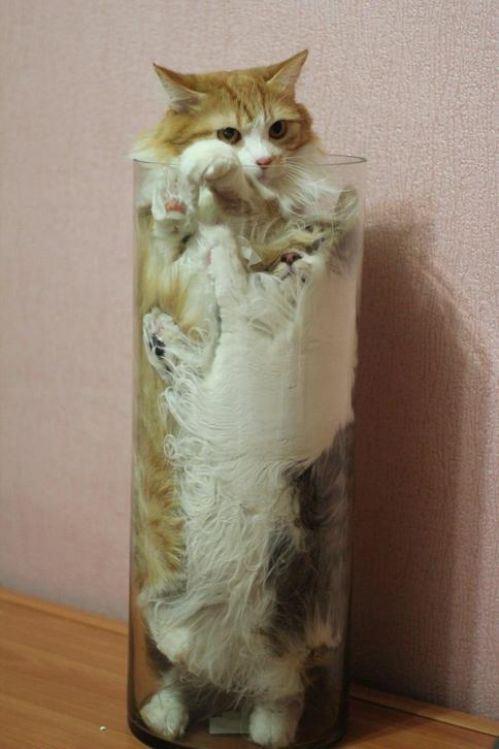 cat-saturday-191_20131216144713d1b.jpg