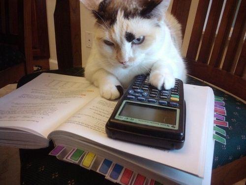 cat-saturday-1_201312161441212e3.jpg
