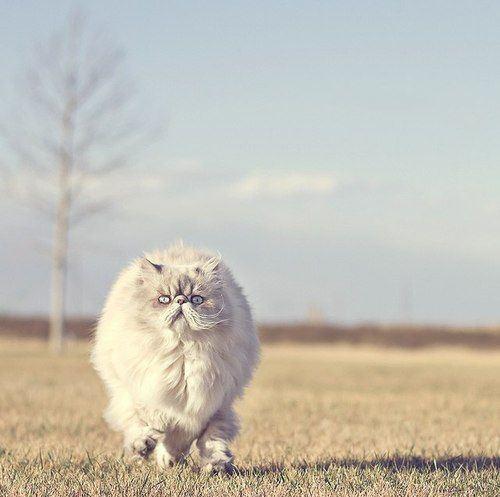 cat-saturday-20_20131216144525b9e.jpg