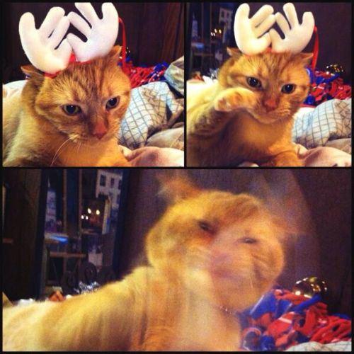 cat-saturday-221_20131216144722c64.jpg