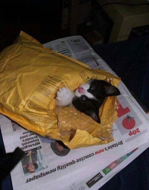 cat-saturday-71_20131216144604b00.jpg