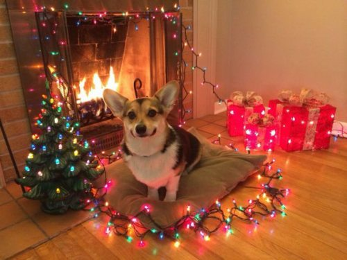 chive-thechive-merry-christmas-98.jpg