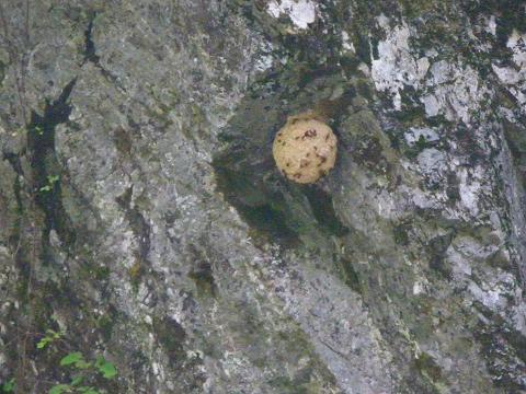 スズメバチの巣でしょ