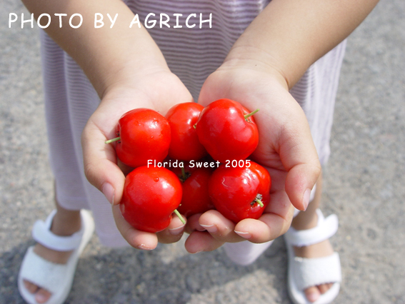 florida sweet 2005