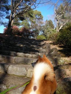 階段を登って2