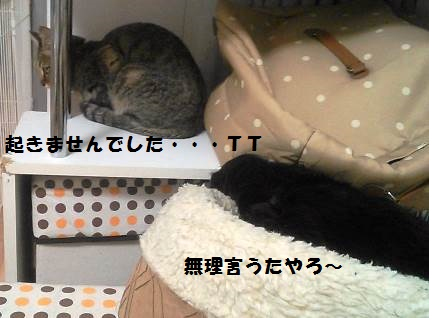 69_marofuku4__130606.jpg