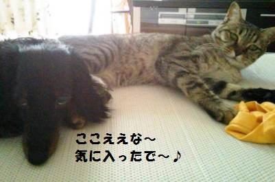 73_marofuku1__130708.jpg