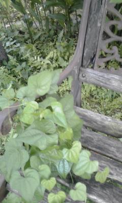ベンチと蔓草