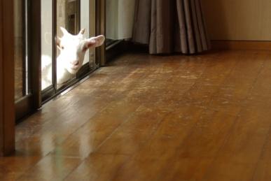 うめちゃん、家を覗く