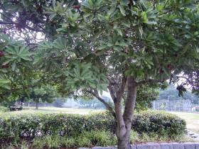 6月25日こちらの木