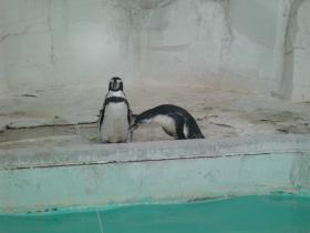 9月10日ペンギン