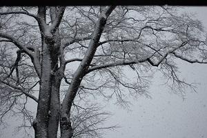snow130114-2.jpg