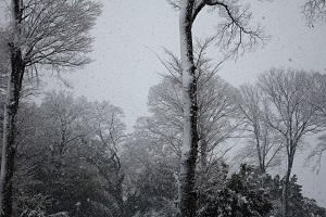 snow130114-3.jpg